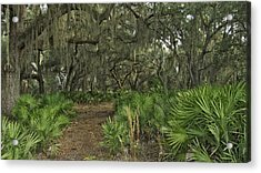 Oak Hammock. Split Oak Forest. Acrylic Print