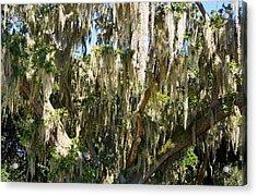 Oak Impression Acrylic Print