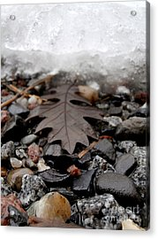 Oak Leaf On A Winter's Day Acrylic Print by Steven Valkenberg