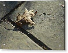 Oak Leaf On Autumn Sidewalk Acrylic Print by Valerie Collins