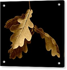 Oak Leaves In Autumn Acrylic Print by Bishopston Fine Art