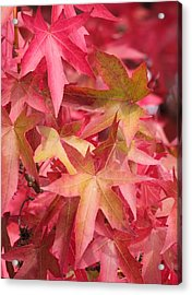 Acrylic Print featuring the photograph Oak Leaves In The Fall by E Faithe Lester