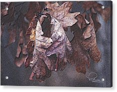 Acrylic Print featuring the photograph Oak Leaves by Ludwig Keck