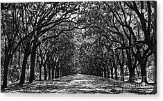 Oak Lined Lane Acrylic Print