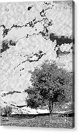 Oak On A Hill Blk And Wht Acrylic Print by Gary Brandes