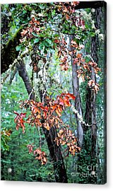 Oak Stories Acrylic Print by Gwyn Newcombe