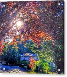 Oak Street Early Evening Light Acrylic Print