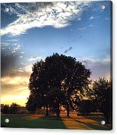 Oak Tree At The Magic Hour Acrylic Print