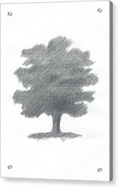 Oak Tree Drawing Number Seven Acrylic Print by Alan Daysh