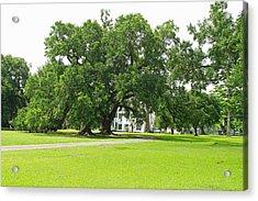 Oak Tree In Front Antibelum Home Acrylic Print by Ronald Olivier