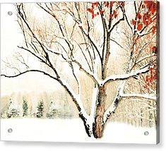 Oak Tree In Winter Acrylic Print by Dorothy Walker