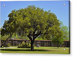 Oak Tree Mission San Jose Tx Acrylic Print