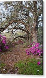 Oak Trees And Azaleas Acrylic Print
