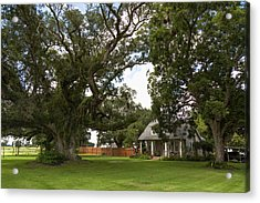 Oak Trees Around Country House Acrylic Print