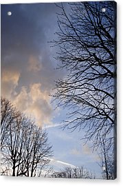 Oak Trees Composition Acrylic Print by Michel Mata