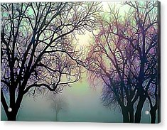 Oak Trees In The Mourning Myst Acrylic Print by Wernher Krutein