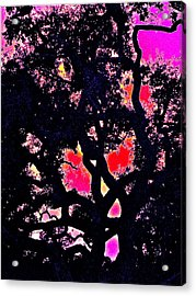 Acrylic Print featuring the photograph Oaks 10 by Pamela Cooper