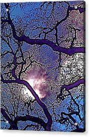 Acrylic Print featuring the photograph Oaks 11 by Pamela Cooper