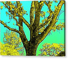 Acrylic Print featuring the photograph Oaks 3 by Pamela Cooper