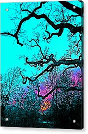 Acrylic Print featuring the photograph Oaks 4 by Pamela Cooper