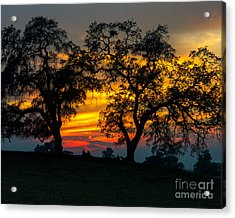 Acrylic Print featuring the photograph Oaks And Sunset by Terry Garvin