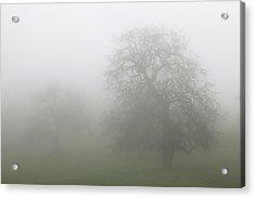 Acrylic Print featuring the photograph Oaks In Fog - Central California by Ram Vasudev