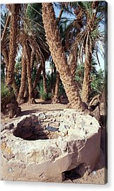 Oasis Well And Trees Acrylic Print