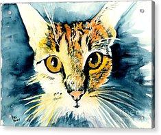 Oatmeal The Cat Acrylic Print