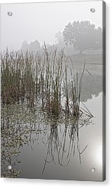 Obscurity 1 Acrylic Print