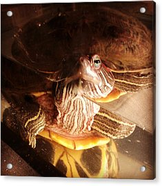 Acrylic Print featuring the photograph Observer And Observee by Thomasina Durkay
