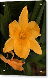 Ocean Beach Yellow Flower Acrylic Print
