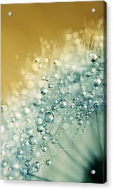 Acrylic Print featuring the photograph Ocean Blue Dandy Sparkles by Sharon Johnstone