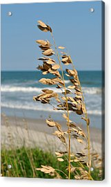 Acrylic Print featuring the photograph Ocean Breeze by Kelly Nowak