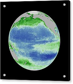 Ocean Chlorophyll Concentrations Acrylic Print by Nasa/gsfc Ocean Ecology Lab