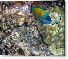 Acrylic Print featuring the photograph Ocean Color by Peggy Hughes