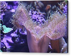 Acrylic Print featuring the photograph Ocean Secrets by Ivete Basso Photography