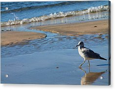 Acrylic Print featuring the photograph Ocean Walk by Alicia Knust