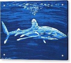 Oceanic White Tip  Acrylic Print