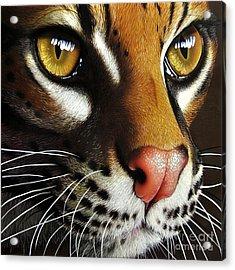 Ocelot Acrylic Print by Jurek Zamoyski
