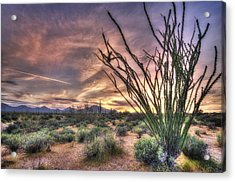 Ocotillo Sunset Acrylic Print