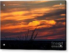 Ocotillo Sunset Acrylic Print by Robert Bales