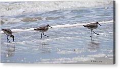 Ocracoke Shorebirds Acrylic Print