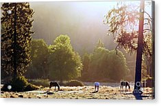 October Graze Acrylic Print