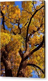 October Acrylic Print by James BO  Insogna