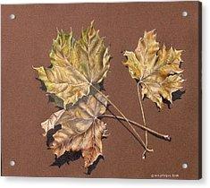October Leaves Acrylic Print by Gina Gahagan