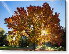 October Maple  Acrylic Print