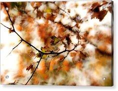 October Acrylic Print by Reka Lendvai