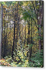 October Woods Acrylic Print by Melissa Stoudt