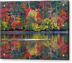 October's Colors Acrylic Print by Dianne Cowen