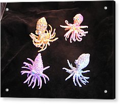 Octopus Buds Acrylic Print by Dan Townsend